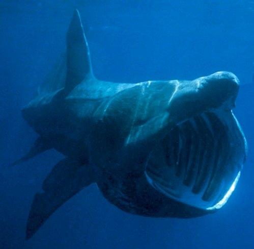 Tenerife l 39 isola d 39 oro tenerife e l 39 oceano for Mammiferi che vivono in acqua